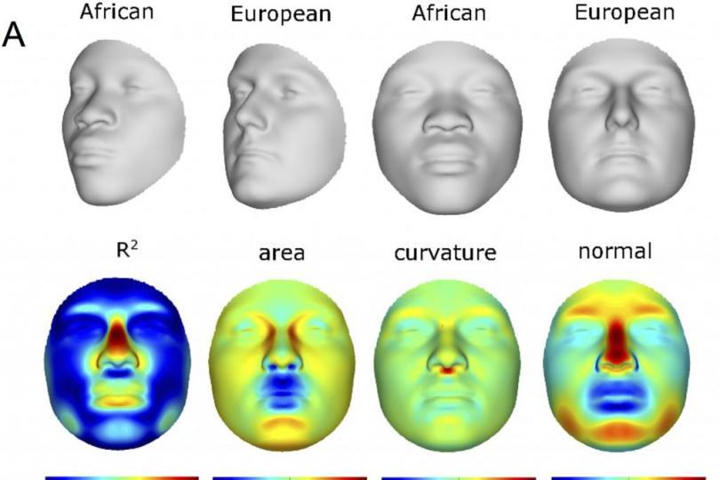 Gelaatsverschillen afhankelijk van etniciteit. Bron: PLOS One