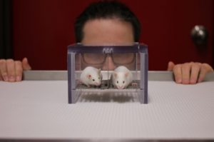 Oh help, een man! Proefdieren kunnen flink gestrest raken door de aanwezigheid van mannelijke onderzoekers. Bron: Alexander H. Tuttle/Pain Genetics Lab