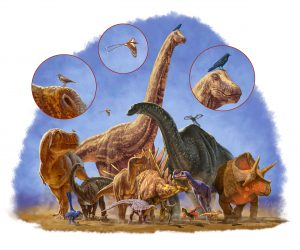 Gedurende 170 miljoen jaar kenden dinosauriërs veel vormen en groottes. De 'kleinste tak' wist erg succesvol verder te evolueren.  Bron: Julius Csotonyi