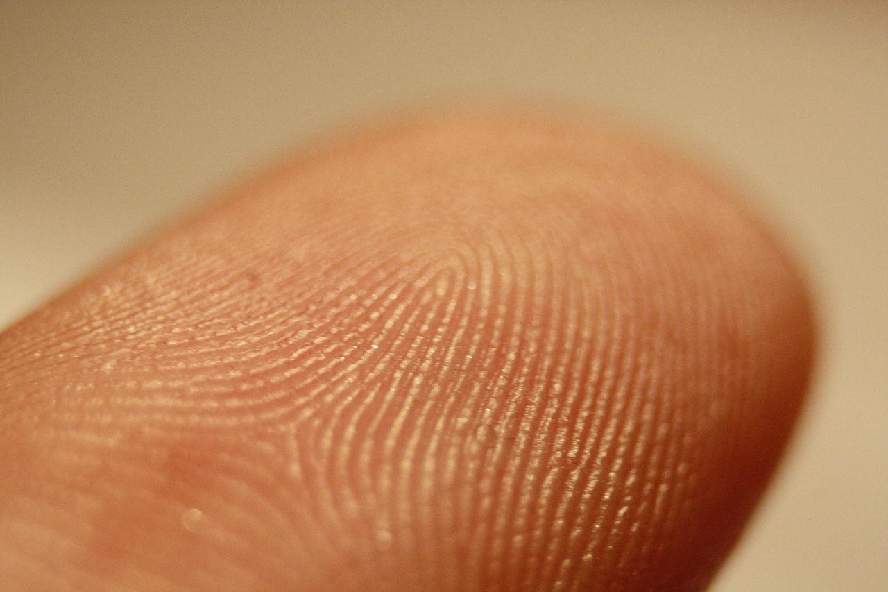 Een stukje huid kan zo uit de 3D-printer rollen. Bron: Wikimedia Commons/Frettie