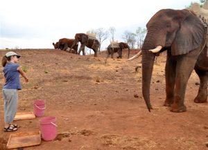Een olifant volgt de wijzende vinger van de onderzoeker. Bron: Anna F. Smet en Richard W. Byrne