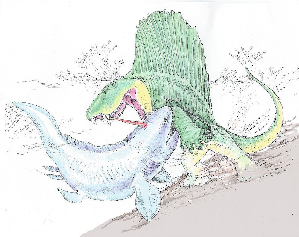 RARW. Een Dimetrodon in gevecht met een Xenacanthus. Bron: Bob Bakker
