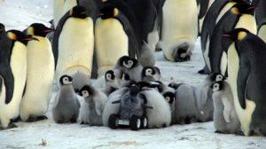 Gezelligheid met de pinguïns.  Bron: Nature Methods