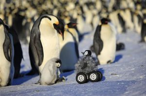 De robot bezoekt de dieren. Bron: Nature Methods