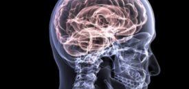 Kan het zikavirus een hersentumor bestrijden? Beeld: Medical University of Vienna