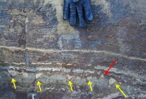 De gevonden structuur uit rotsen in Groenland. Beeld: Abigail Allwood