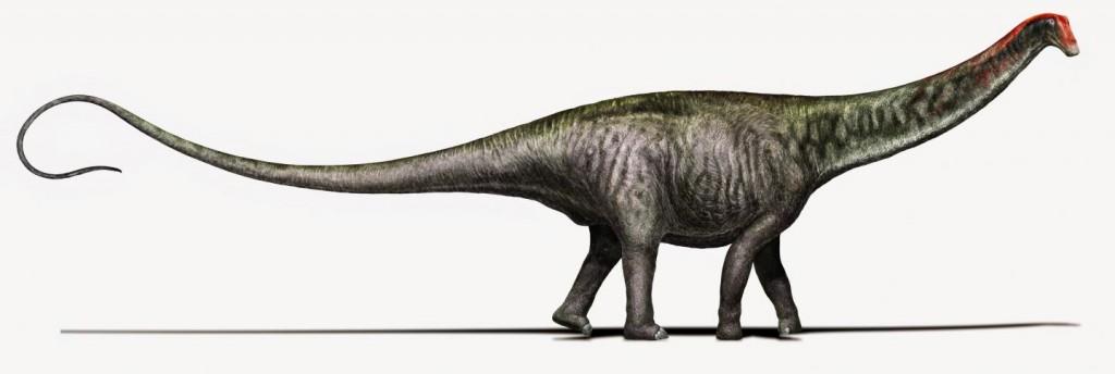 De brontosaurus. Bron: Davide Bonadonna