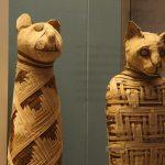 Dierenmummies in het British museum. Bron: Wikimedia Commons/Mario Sanchez