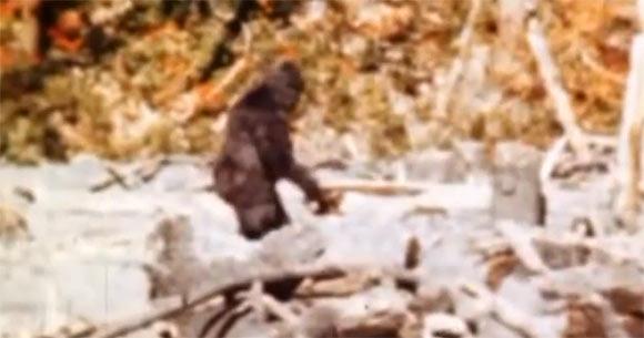 In 1967 filmden Roger Patterson en Robert Gimlin deze beelden nabij de Klamath-rivier, ten noordwesten van Orleans in Californië. De beelden, waarop Bigfoot te zien zou zijn, raakten al snel wereldberoemd. Bron: Patterson-Gimlin