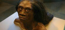 Wat heeft de Homo floresiensis uitgeroeid? Beeld: Flickr | Ryan Somma