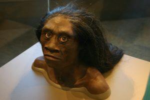 Wat heeft de Homo floresiensis uitgeroeid? Beeld: Flickr/Ryan Somma