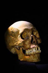 Menselijke schedels worden verkocht aan de hoogste bieder. Bron: Ray Myint via Flickr CC.