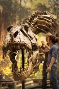T.rex Trix