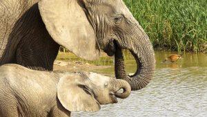 Adoo Elephant Park