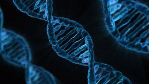 DNA basen