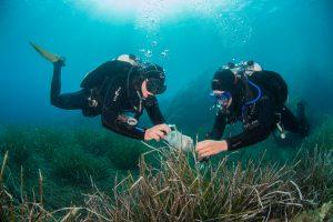 Christian Jogler en zijn collega's duiken regelmatig naar de zeebodem om de bacteriën te verzamelen die als nieuwe antibioticamachientjes kunnen dienen.
