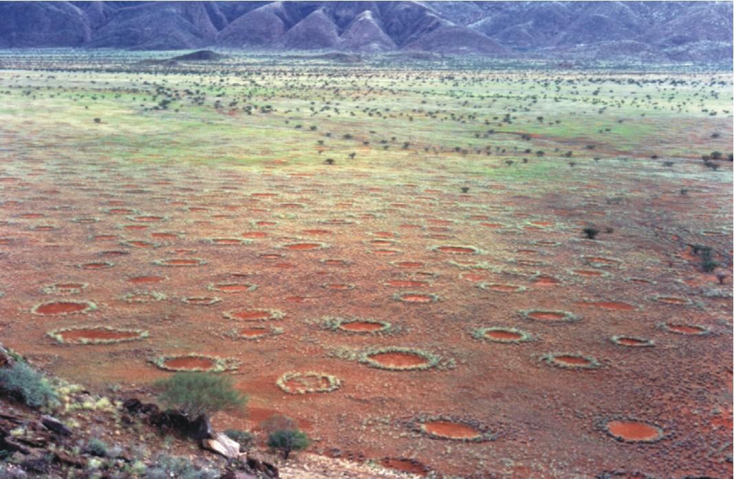 Eindelijk verklaring voor mysterieuze feeëncirkels in Namibië