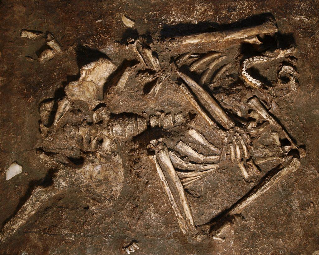 De opgegraven botten van de Kebara 2. Beeld: J. Trueba/Madrid Scientific Films