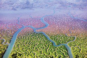 De getijden zorgen voor een bijzondere groei van algen en bacteriën. Foto: Cristobal Serrano