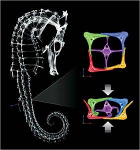 Op deze foto is goed te zien hoe de botachtige ring het ruggenmerg blijft beschermen als hij ingedrukt wordt. Foto: McKittrick Research Group/Jacobs School of Engineering, UC San Diego