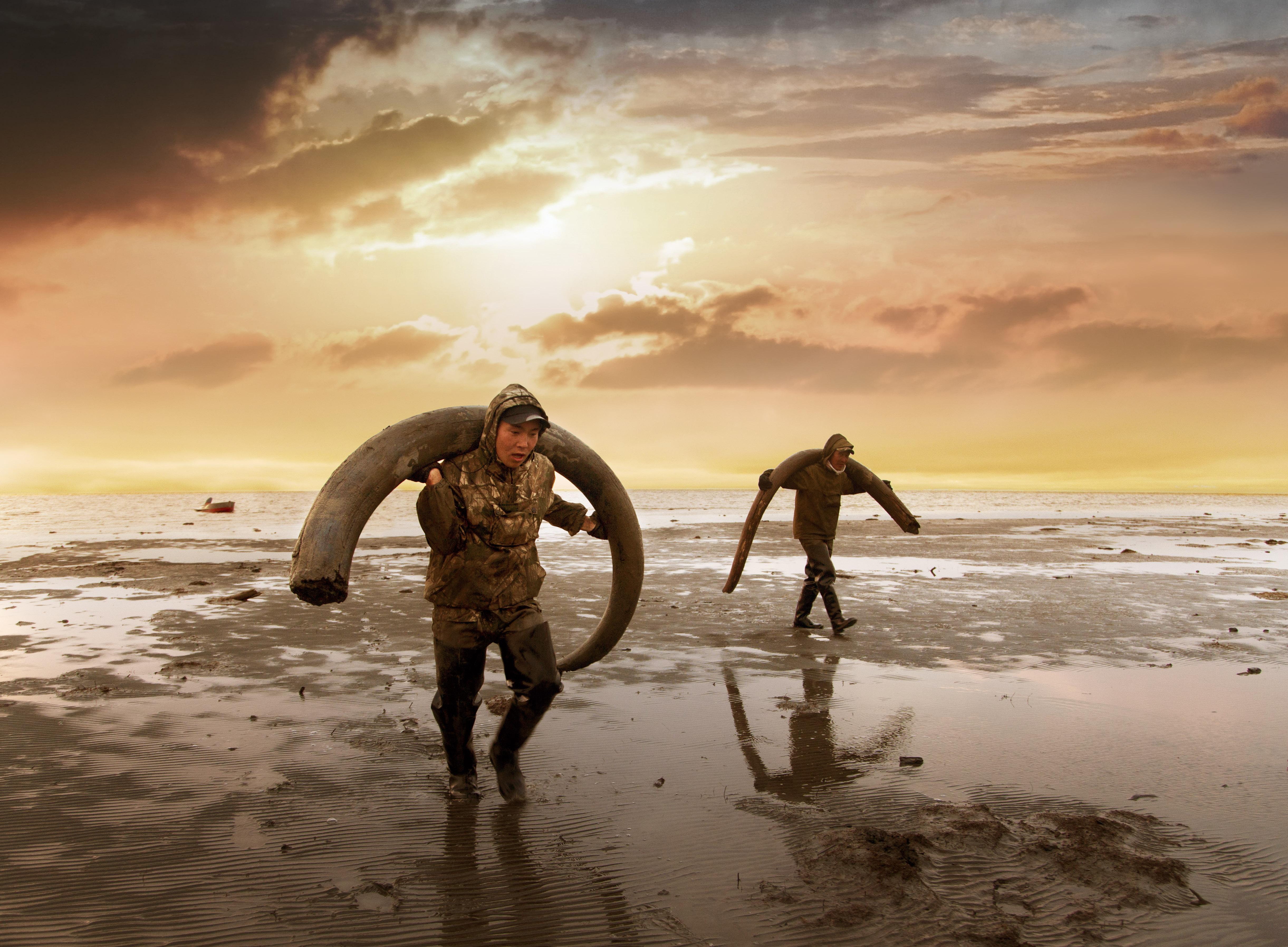 Elke zomer zoeken Jakoetiërs naar slagtanden. Niet voor de wetenschap, maar voor de ivoorhande. Beeld: Genesis 2.0