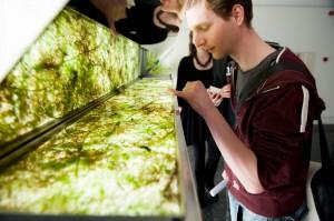 Een levend kunstwerk van algen en andere waterwezens uit de vijver van het GEM-museum. Foto: Maarten Fleskens