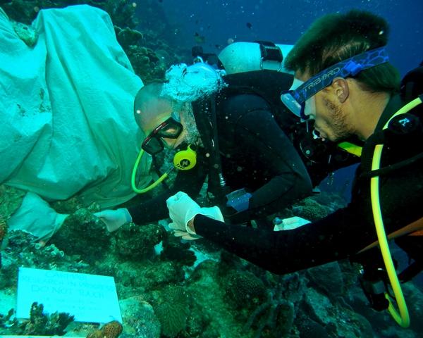 Het onderzoek werd uitgevoerd bij een rif in Curaçao. Bron: Benjamin Mller