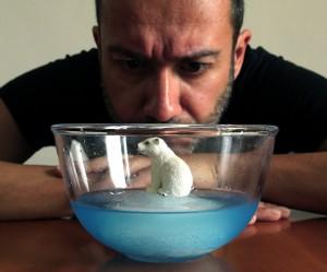 Door smeltende poolkappen verliest de ijsbeer zijn leefruimte. Foto: Luca Vanzella