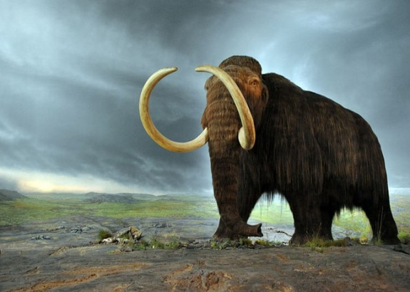 De wolharige mammoet Bron: Royal British Columbia Museum