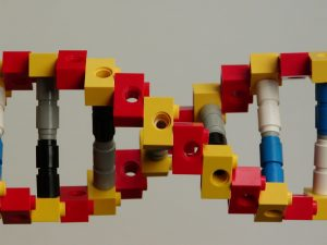 genoom