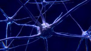 Neuron1-300x169.jpg