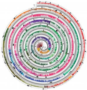 De nieuwe levensboom laat bevat meer dan 50.000 soorten. Klik op de afbeelding voor hoge resolutie. Afbeelding: Temple University.