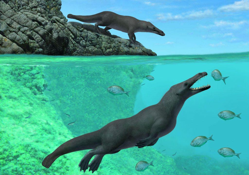 Walvissen liepen ooit op land. Beeld: A. Gennari