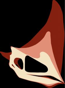 Zo zou de ontwikkeling van de kop van Caiuajara dobruskii in zijn werk gaan. Hoe lichter de kleur, hoe jonger het dier is. Bron: 2014 Manzig et al., Creative Commons