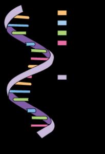 Voor het eerst maakten wetenschappers in een lab adenosine en guanosine. Afbeelding: Andrea Laurel