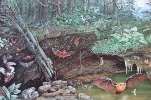 Deze artistieke impressie uit 1991 laat zien hoe het leefgebied van de mosselkreeftjes er 17 miljoen jaar geleden uitzag. Bron: Dorothy Dunphy.