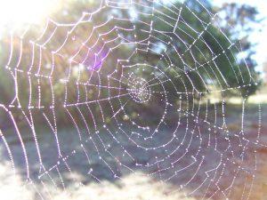 Door spinrag te verstevigen met koolstof nanobuisjes hebben wetenschappers een sterke, geleidende stofdraad ontwikkeld.