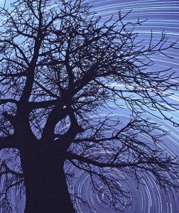 Sterrensporen met Baobab door Jan Koeman