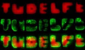 Bacteriën werden door de onderzoekers in de letters TUDELFT gegroeid - uit naam der wetenschap. Foto: Fabai Wu/Cees Dekker Lab Delft