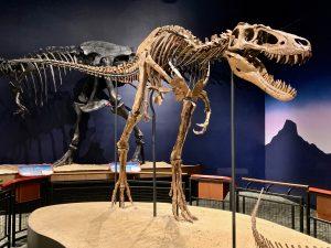 T. rex Jane