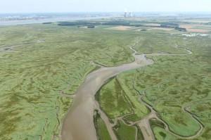 Wetlands rondom de Schelde.  Beeld: beeldbank.rws.nl, Rijkswaterstaat / Joop van Houdt