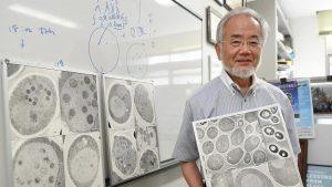 Nobelprijswinnaar Yoshinori Ohsumi poseert hier met afbeeldingen autofagerende cellen. Beeld: Akiko Matsushita/Kyodo News/Reuters