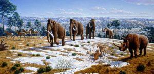 In vijf sterftegolven zijn veel diersoorten uitgeroeid, waaronder de mammoet. Bron: Public Library of Science