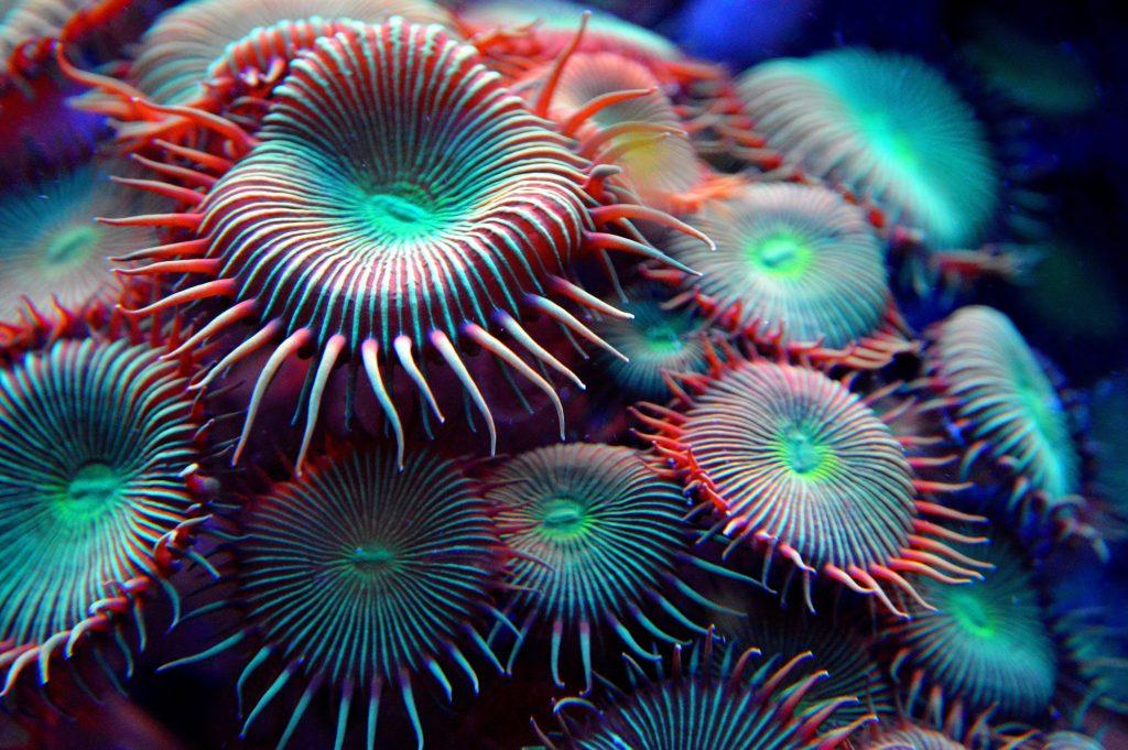 Mogelijk helpt elektriciteit om het koraal te herstellen. Beeld: AliceKeyStudio | Pixabay