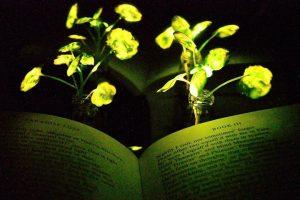 Lichtgevende plant