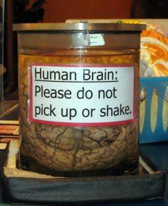 Hersenen van oude mensen kunnen ons vertellen hoe we mentaal fit blijven. Foto: Steve and Shanon Lawson