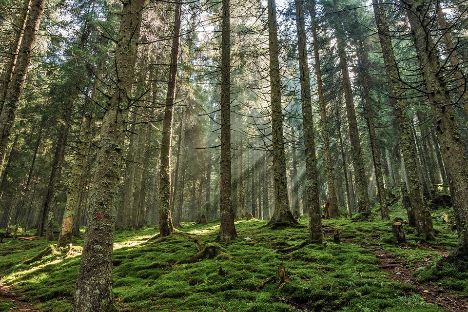 Hangende takken duiden erop dat bomen de nacht 'slapend' doorbrengen