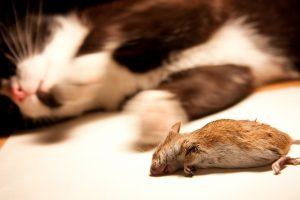 Na de dood zijn verschillende genen onder andere in muizen nog springlevend. Foto: Magic Madzik