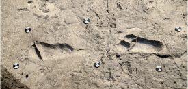 De voetstappen die onlangs gevonden zijn in Laetoli, zijn veruit de oudste voetsporen van mensachtigen ooit gevonden. Bron: eLife 2016;5:e19568