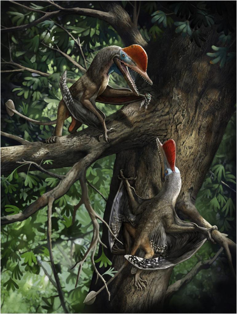monkeydactyl